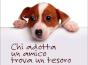 adotta un cane small